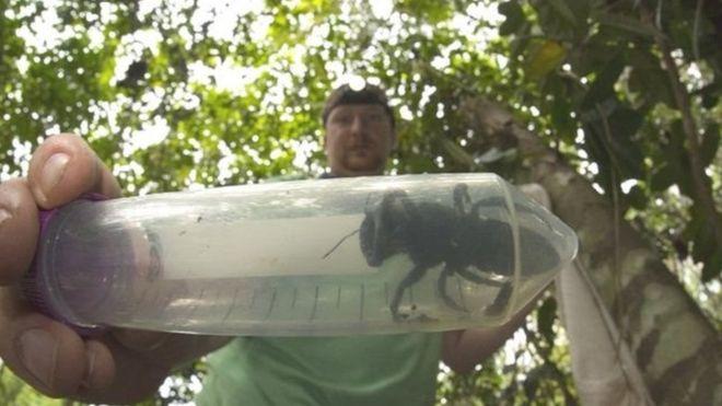 https: img.okezone.com content 2019 02 22 337 2021459 lebah-terbesar-di-dunia-ditemukan-kembali-di-maluku-sempat-dikira-sudah-punah-pivIomuWkN.jpg