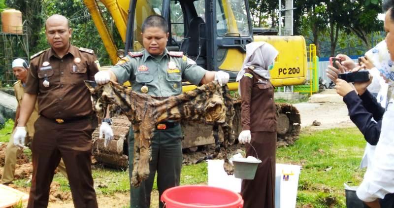 https: img.okezone.com content 2019 02 25 340 2022718 kulit-harimau-dan-gading-gajah-barang-bukti-kejahatan-dibakar-8Ffuqdl75X.jpg