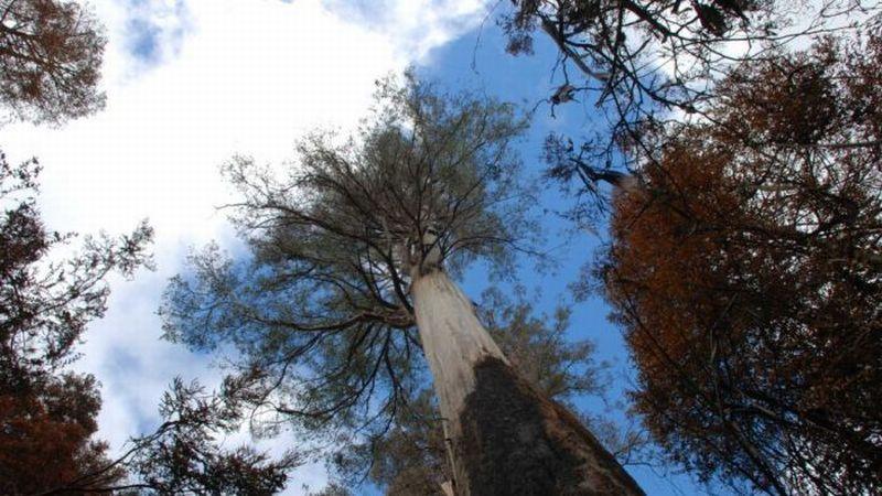 https: img.okezone.com content 2019 02 27 18 2023336 diterjang-kebakaran-hutan-pohon-tertinggi-di-australia-tetap-kokoh-epjTuxppVo.jpg