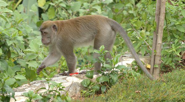 https: img.okezone.com content 2019 02 28 608 2023912 warga-tapanuli-selatan-diresahkan-serangan-monyet-yang-masuk-perkampungan-QTbUuWWd3t.jpg