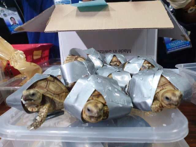 https: img.okezone.com content 2019 03 04 18 2025569 1-500-kura-kura-ditemukan-dalam-kondisi-dilakban-di-filipina-up1j9G30P0.jpg