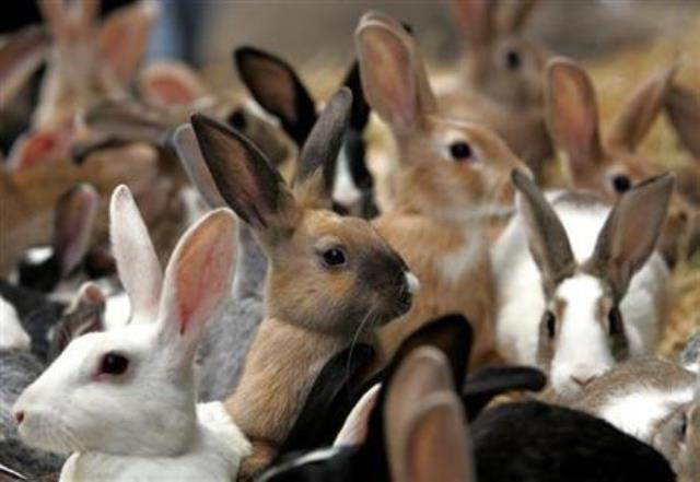 https: img.okezone.com content 2019 03 04 18 2025785 kelinci-dijadikan-alat-terapi-untuk-kesehatan-mental-di-nebraska-amerika-serikat-dyMAD9hICD.jpg