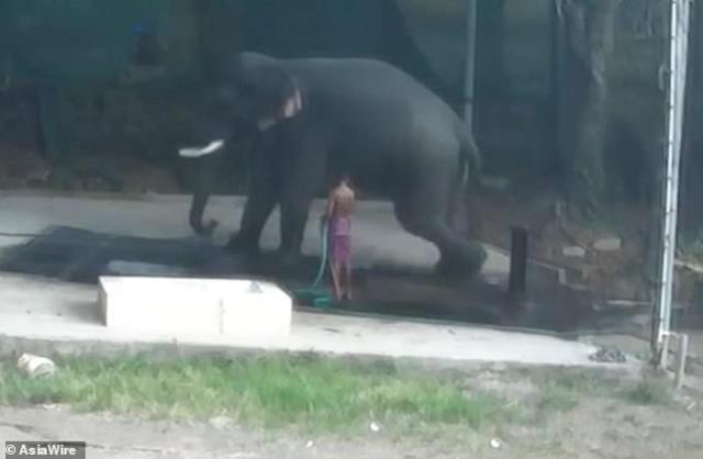 https: img.okezone.com content 2019 03 04 18 2025796 pria-india-tewas-diduduki-gajah-vuE7pwGoT5.jpg
