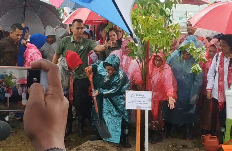 https: img.okezone.com content 2019 03 11 337 2028377 hujan-hujanan-iriana-jokowi-tanam-pohon-mangrove-di-tanjung-lesung-yAlhJR03vu.jpg