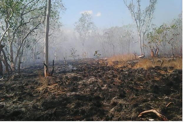 https: img.okezone.com content 2019 03 12 340 2028691 hutan-konservasi-taman-wisata-alam-sungai-dumai-riau-terbakar-6JP6Xuu8MQ.jpg