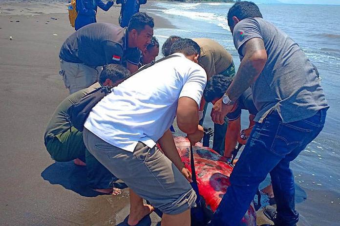 https: img.okezone.com content 2019 03 12 340 2028964 bangkai-paus-lodan-ditemukan-terdampar-di-pantai-rangkan-5JtPMrsnqO.jpg