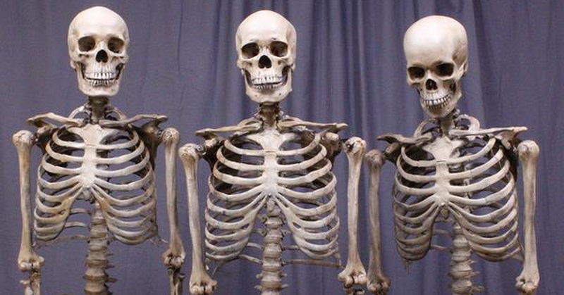 https: img.okezone.com content 2019 03 15 56 2030634 ini-bagian-tubuh-jenazah-yang-tidak-akan-hancur-fK3dnBHCIv.jpg