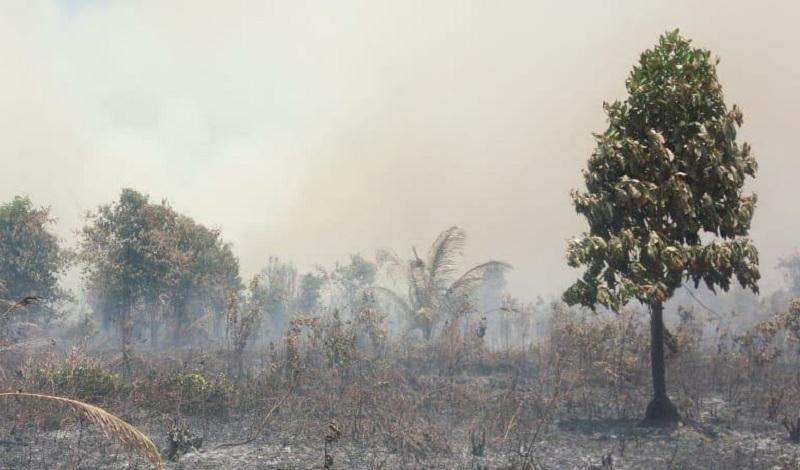 https: img.okezone.com content 2019 03 17 340 2031113 terkendala-sumber-air-kebakaran-di-meranti-riau-meluas-InWzIgYCI4.jpg