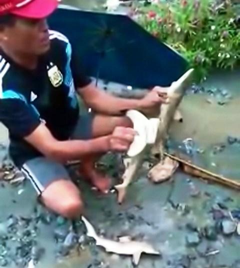 https: img.okezone.com content 2019 03 19 340 2032092 warga-sentani-sebut-ikan-hiu-legenda-yang-ditemukan-saat-banjir-bandang-JEcsw5HDhw.JPG