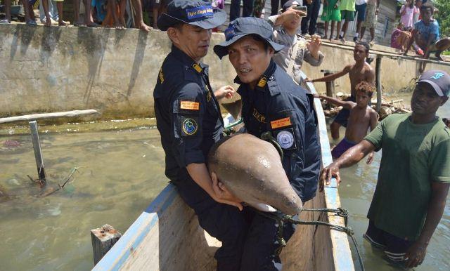 https: img.okezone.com content 2019 03 19 340 2032303 kkp-lepasliarkan-spesies-dilindungi-dugong-MbqiDcFCFG.jpg