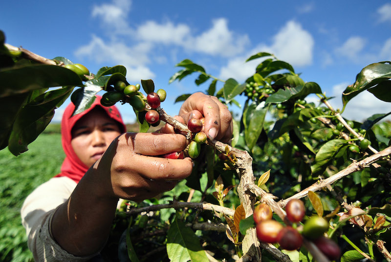https: img.okezone.com content 2019 03 21 612 2033228 cegah-bencana-alam-menanam-kopi-di-lahan-hutan-bisa-jadi-solusi-klcRkjy2WE.jpg