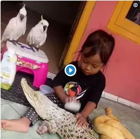 https: img.okezone.com content 2019 03 22 612 2033511 abis-dimandiin-giliran-gadis-cilik-ini-bedakin-buaya-netizen-abis-ini-ngaji-bareng-fjCOvy6c1X.jpg