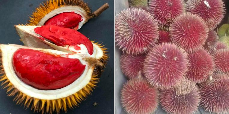 Dari Sepetak Tanah Pria Asal Malaysia Punya 80 Jenis Durian
