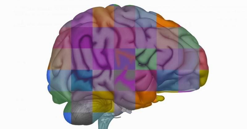 https: img.okezone.com content 2019 04 13 56 2043083 ilmuwan-memasukkan-gen-otak-manusia-ke-kera-wfPnzA7fhC.jpg