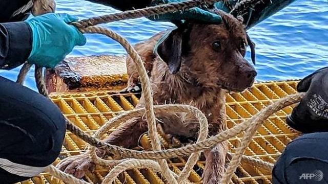 https: img.okezone.com content 2019 04 16 18 2044278 seekor-anjing-ditemukan-berenang-220-km-dari-bibir-pantai-1ceUpSlDFf.jpg