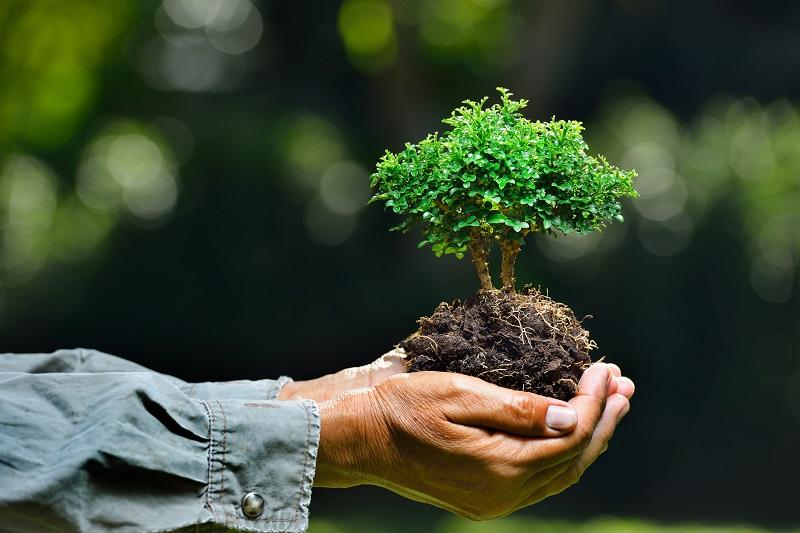 https: img.okezone.com content 2019 04 20 406 2045815 cara-masyarakat-berau-peduli-hutan-demi-cegah-kerusakan-lingkungan-wlV76ybaEQ.jpg