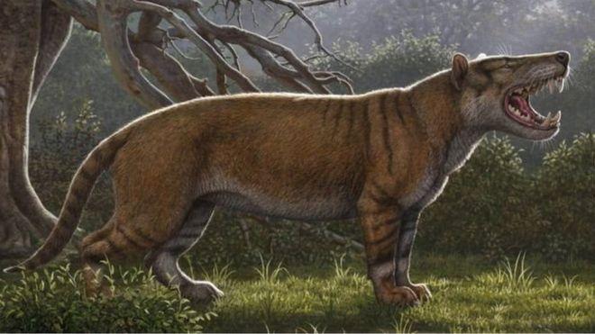 https: img.okezone.com content 2019 04 22 18 2046239 fosil-singa-raksasa-ditemukan-di-laci-museum-kenya-hPVR0SuXt0.jpg