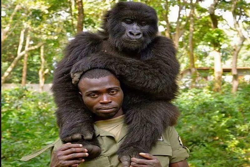 https: img.okezone.com content 2019 04 22 406 2046433 selfie-mesra-pejuang-anti-perburuan-hewan-dengan-gorila-usLnfpgbK8.jpg
