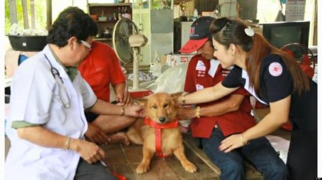 https: img.okezone.com content 2019 04 22 612 2046705 5-kisah-heroik-anjing-selamatkan-bayi-dari-kematian-2zmMfzIwGt.jpg