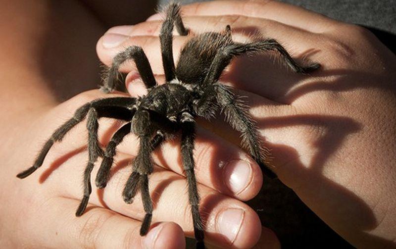 https: img.okezone.com content 2019 04 25 481 2048000 nonton-spider-man-dan-ant-man-bisa-hilangkan-fobia-serangga-loh-HXCnLVFtba.jpg