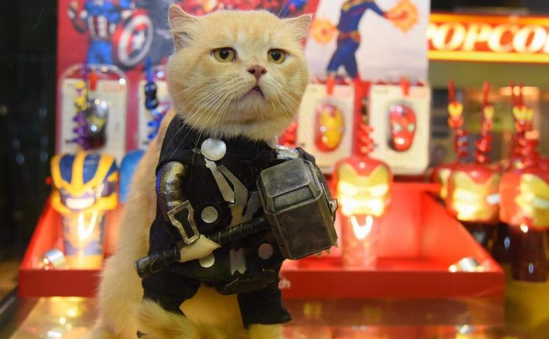 https: img.okezone.com content 2019 05 06 612 2051957 lucunya-catvangers-kucing-yang-cosplay-jadi-karakter-avenger-endgame-Wnu32JhJvu.jpg