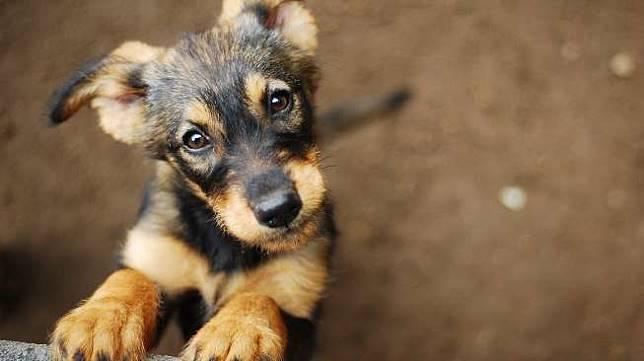 https: img.okezone.com content 2019 05 07 612 2052640 viral-anak-kecil-berbagi-rezeki-dengan-anjing-bikin-miris-lihatnya-3aUshHL3Ml.jpg