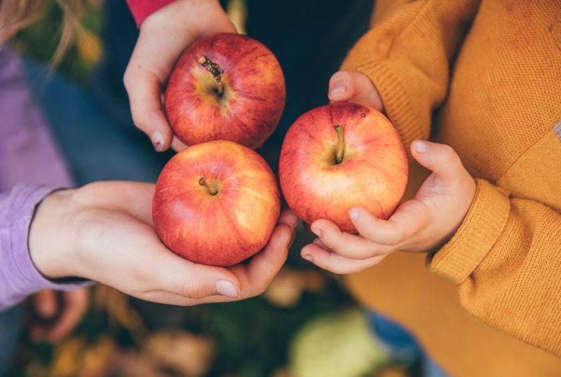 bila Anda tidak sengaja menelan biji apel, sistem metabolisme tubuh akan kesulitan untuk mencernanya.