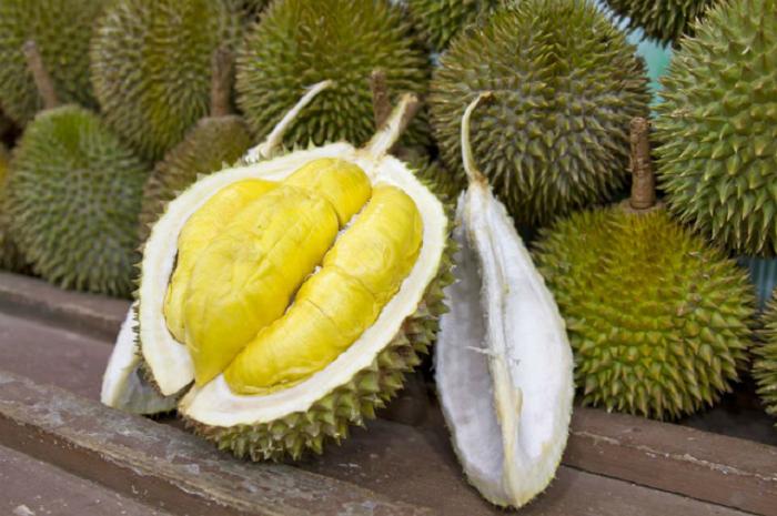 https: img.okezone.com content 2019 05 17 481 2056789 ini-aturan-makan-durian-bagi-ibu-hamil-5t20SQmY2k.png