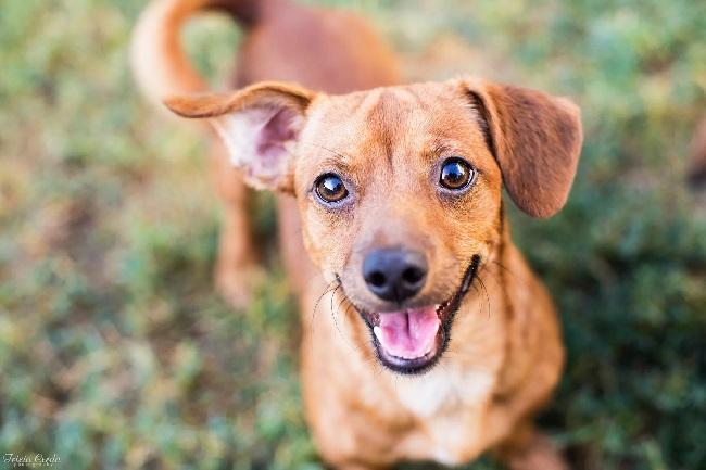 https: img.okezone.com content 2019 05 23 56 2059618 ketika-anjing-tersenyum-ini-penjelasan-ilmiahnya-L2HX41nOP4.jpg