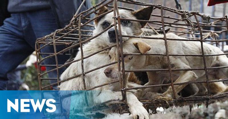 https: img.okezone.com content 2019 05 29 244 2061875 kasus-anjing-rabies-di-klungkung-bali-terus-bertambah-FFP3d1DLB2.png