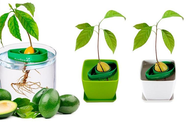 https: img.okezone.com content 2019 05 31 298 2062651 pohon-alpukat-mini-khusus-anak-anak-baik-untuk-tumbuh-kembangnya-WalcSivUEr.jpg