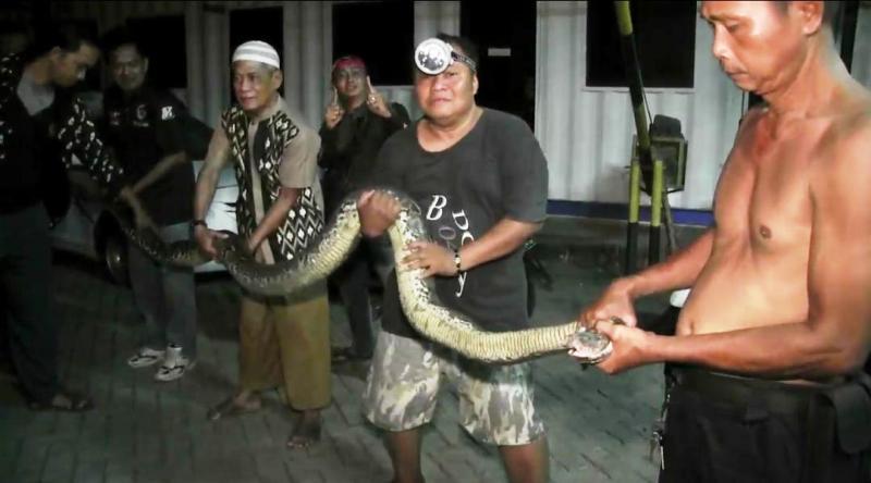 https: img.okezone.com content 2019 06 02 338 2063087 temuan-ular-piton-sepanjang-6-meter-gegerkan-warga-bekasi-Yf77AWrMtC.jpg