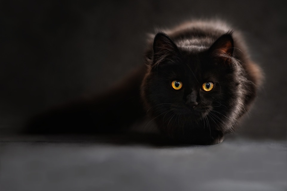 https: img.okezone.com content 2019 06 11 612 2065266 takut-dimandikan-kucing-ini-teriak-sebut-nama-agus-4QbU1RKeJx.jpg