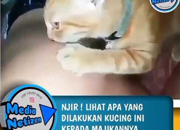 https: img.okezone.com content 2019 06 15 612 2066720 video-viral-seorang-pria-yang-diperkosa-kucing-beredar-rN8hDn8LYE.png