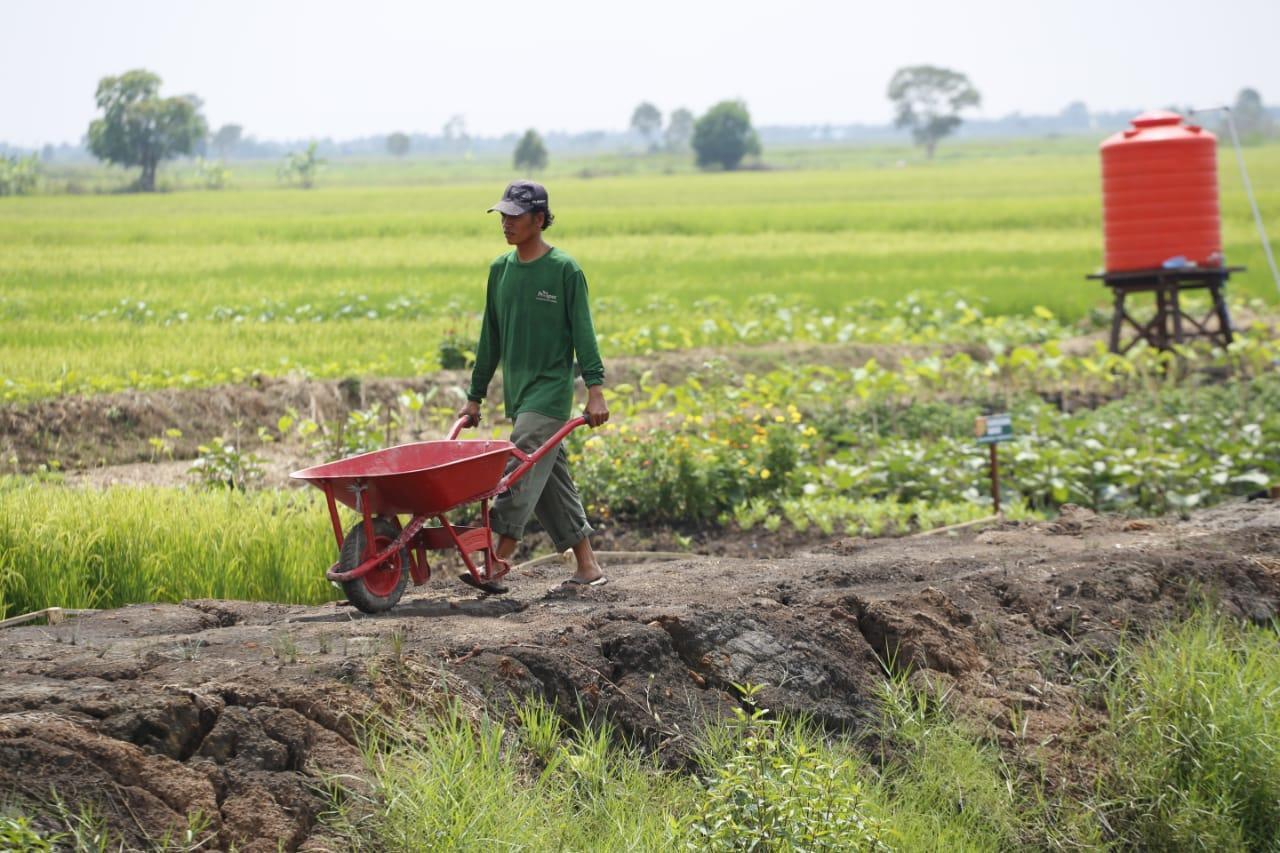https: img.okezone.com content 2019 06 24 320 2070174 dpd-kementan-berhasil-mendorong-ekspor-pertanian-W21pLKbRma.jpg