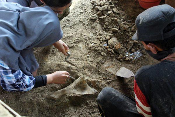 https: img.okezone.com content 2019 07 01 512 2073095 149-fosil-binatang-purba-ditemukan-di-tepi-bengawan-solo-tL21v8EAjy.jpg