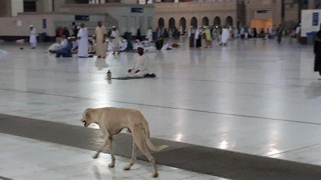 https: img.okezone.com content 2019 07 04 614 2074426 foto-anjing-berkeliaran-di-masjidil-haram-jadi-viral-dUpL4y0ZTC.jpg
