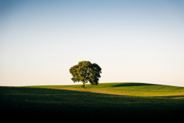 https: img.okezone.com content 2019 07 07 56 2075569 bumi-miliki-ruang-untuk-1-triliun-pohon-bisa-atasi-perubahan-iklim-KDdQonG4xg.jpg