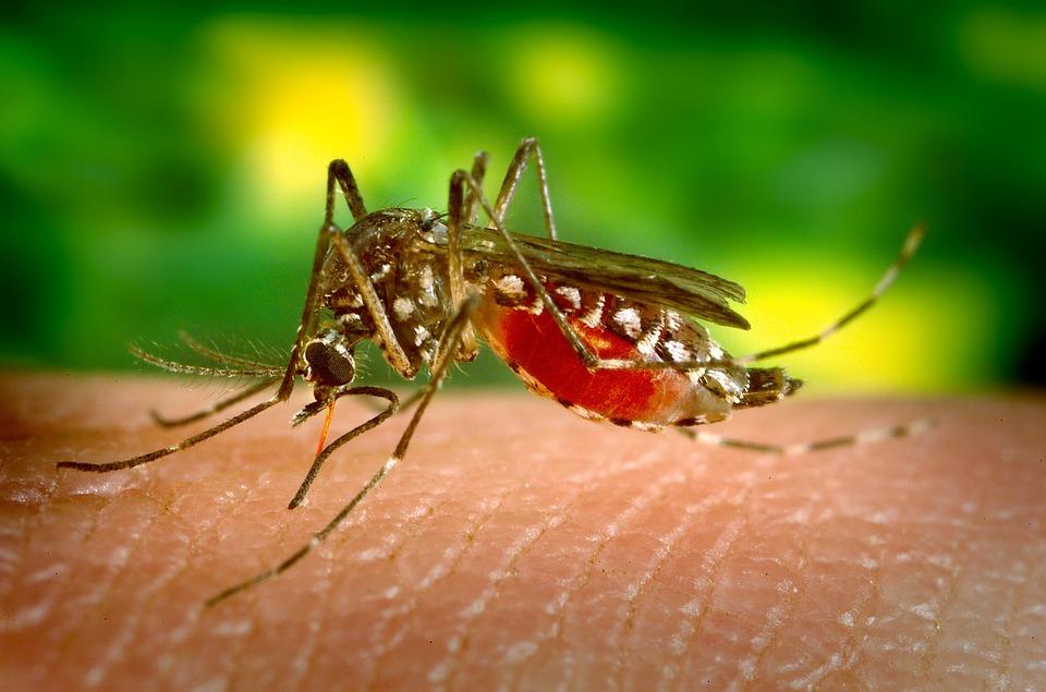 https: img.okezone.com content 2019 07 09 481 2076455 wabah-chikungunya-sebabkan-warga-bogor-tak-bisa-jalan-who-sarankan-pencegahan-sederhana-ini-8jQhdDoY4p.jpg