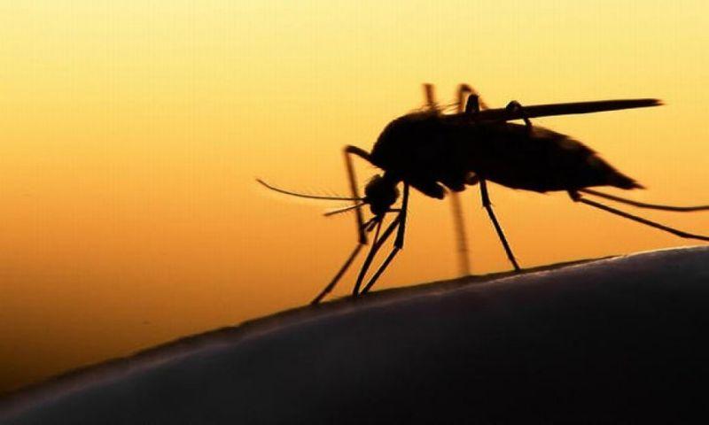 https: img.okezone.com content 2019 07 12 525 2078272 dinkes-jabar-cari-tahu-penyebab-warga-bogor-terserang-virus-chikungunya-uWZ7B69en7.jpg
