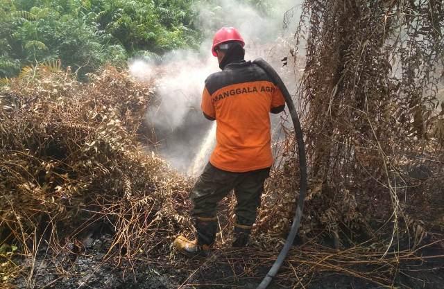 https: img.okezone.com content 2019 07 17 340 2080301 3-pekan-belum-padam-kebakaran-hutan-dan-lahan-di-rohil-meluas-3l4XEMBWsL.jpg