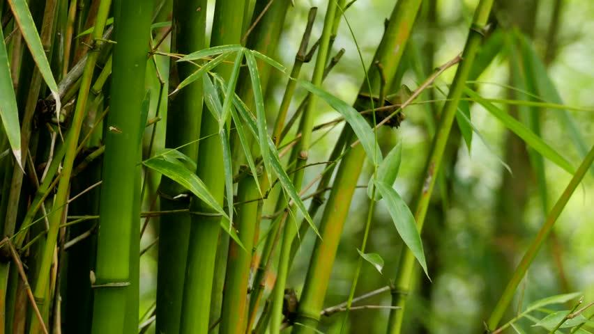https: img.okezone.com content 2019 07 17 612 2080227 bambu-bisa-jadi-solusi-isu-sampah-plastik-sekali-pakai-LhnvooXmfS.jpg
