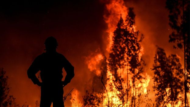 https: img.okezone.com content 2019 07 22 18 2081917 800-petugas-pemadam-dikerahkan-untuk-atasi-kebakaran-hutan-besar-di-portugal-Ownjo3ZGjc.jpg