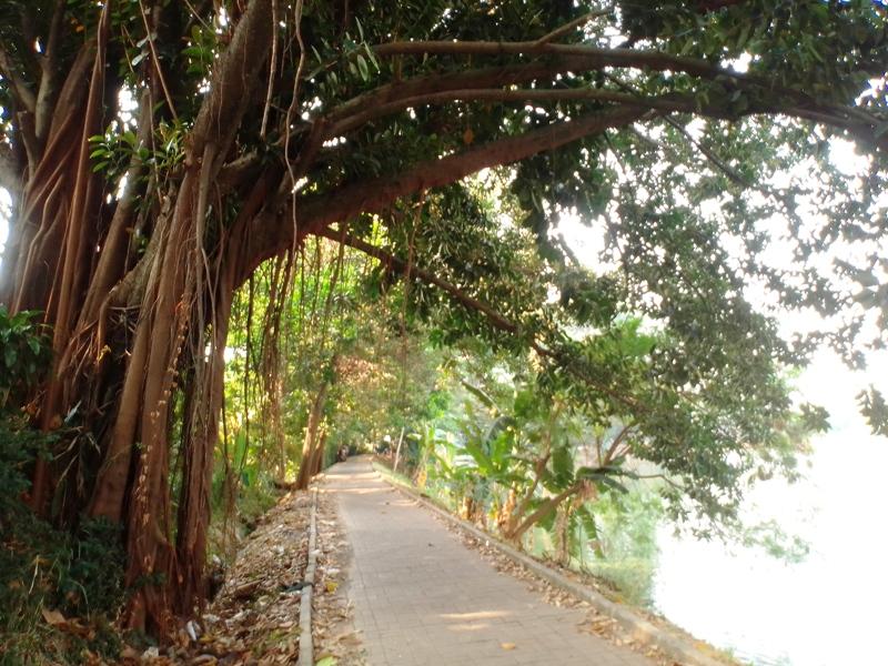 https: img.okezone.com content 2019 07 25 338 2083635 menerawang-genderuwo-penunggu-pohon-karet-di-tangsel-tempat-warga-minta-nomor-togel-IULtYoka6P.jpg