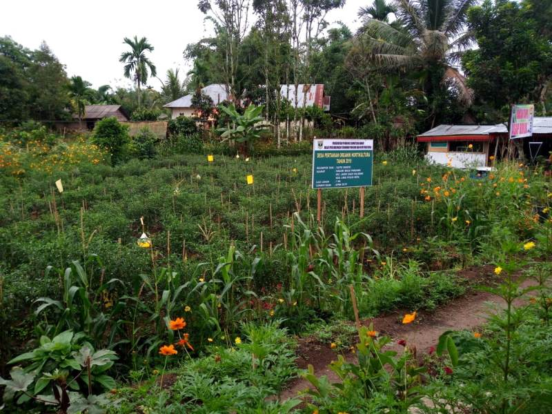 https: img.okezone.com content 2019 07 26 1 2083829 kementan-kampanyekan-pertanian-organik-di-sumbar-KvpcyzwhvO.jpeg