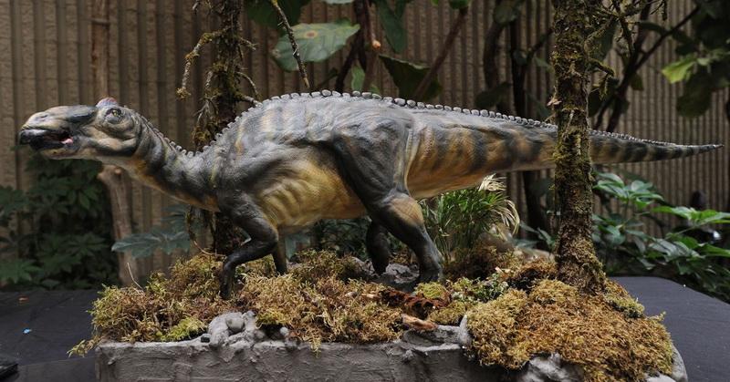https: img.okezone.com content 2019 07 31 612 2085783 bocah-10-tahun-temukan-11-telur-dinosaurus-ini-kisahnya-olIwm2ou0t.jpg