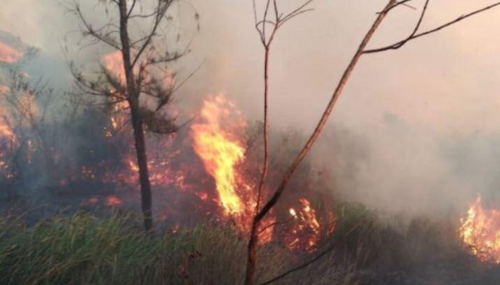 https: img.okezone.com content 2019 08 02 519 2086891 kebakaran-hutan-gunung-welirang-padam-petugas-masih-bersiaga-di-lokasi-dLA7fb70QI.JPG