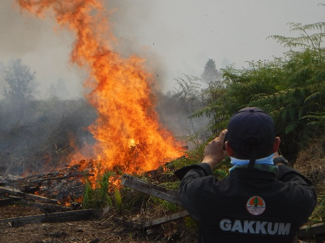 https: img.okezone.com content 2019 08 03 337 2087301 bakar-lahan-seluas-274-hektare-di-kubu-raya-seorang-pria-ditangkap-cmWJGfml0m.jpg