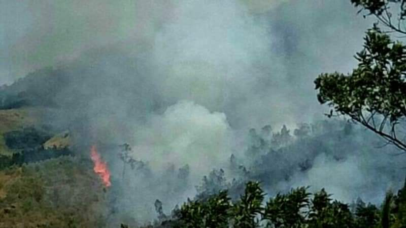 https: img.okezone.com content 2019 08 06 519 2088655 kebakaran-hutan-di-jawa-timur-berhasil-dipadamkan-gdKPlh6eWw.jpg