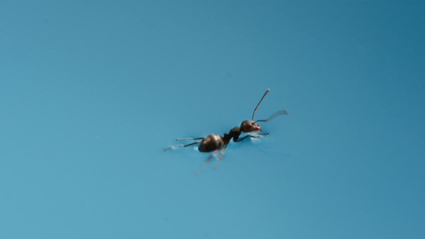 https: img.okezone.com content 2019 08 07 614 2088997 nasihat-mbah-moen-untuk-menolong-semut-yang-terpeleset-ke-dalam-air-EhACGjixIz.jpg